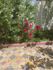 Um jardim em Дом у главный трассы