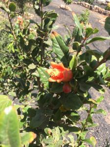Zahrada ubytování Casa La Paz-Teepee Barranco