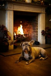 Pet or pets staying with guests at The Ormond At Tetbury