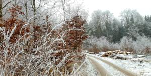 Chaloupka u lesa v zimě