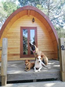 Haustiere von Gästen der Unterkunft Glamping Sintra