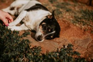 Pet or pets staying with guests at Chalés Família Fioreze