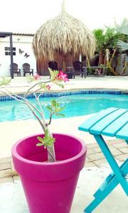 A piscina localizada em Apartment Curacao ou nos arredores