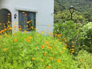 A garden outside Wuju Wusu B&B