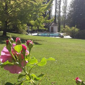 A garden outside Château La Grave Béchade