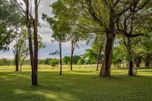 Ein Garten an der Unterkunft Banyan Tree