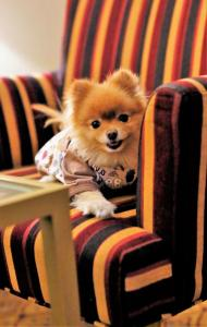 Pet or pets staying with guests at Renaissance Moscow Monarch Centre Hotel by Marriott