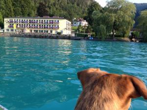 Haustiere von Gästen der Unterkunft See-Hotel Post am Attersee