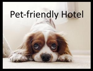 Pet or pets staying with guests at Euromotel Croce Bianca
