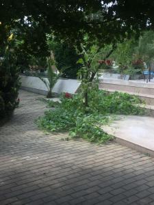 Сад в Hotel Amigo I