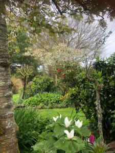 A garden outside Southland Organic Farmstay