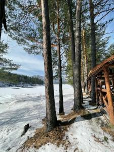 Сила Алтая during the winter