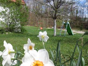 Zahrada ubytování House Katja