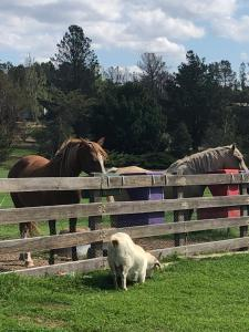 Pet or pets staying with guests at Alpine Country Motel