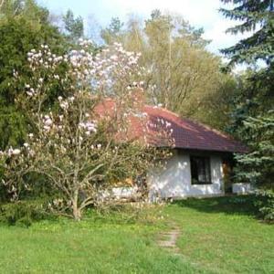 Ein Garten an der Unterkunft Waldhotel Stein