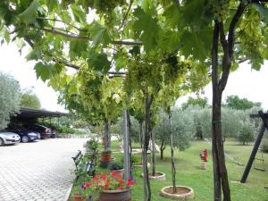 A garden outside Apartments Mirjana