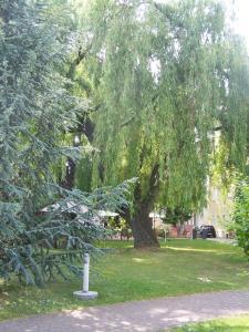 Ein Garten an der Unterkunft Dresdner Hof