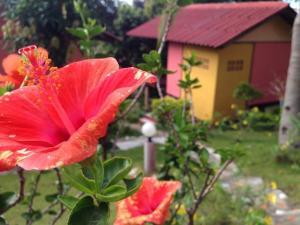 Een tuin van J.B.Hut Bungalows