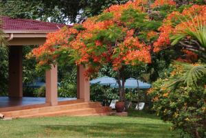 A garden outside Abangane Guest Lodge