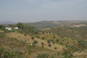 Natural landscape near the country house