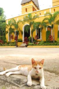 Pet or pets staying with guests at Riad Hua Hin