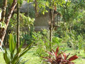 A garden outside Neptune Adventure - Tatai River Bungalows