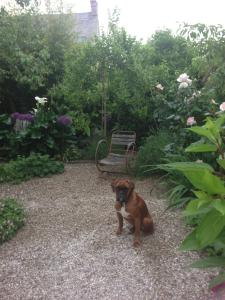 Pet or pets staying with guests at Logis Saint-Léonard