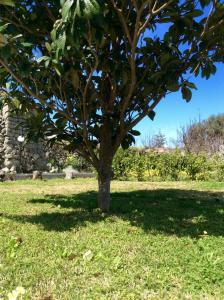 Giardino di Villa Carano