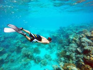 Hacer snorkel o bucear en el hostal o pensión o alrededores