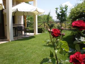 Κήπος έξω από το Ξενώνας Ολυμπία