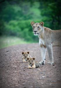 Pet or pets staying with guests at Leopard Mountain Safari Lodge