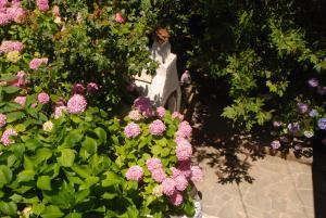 O grădină în afara Armonia Samothraki Rooms