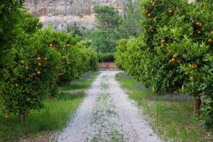 A garden outside Ekinoks Hotel - Adults Only