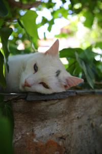 Pet or pets staying with guests at Villa Galini