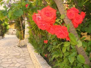 Κήπος έξω από το Mirabelle Hotel