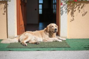 Pet or pets staying with guests at Farm Stay Kramer