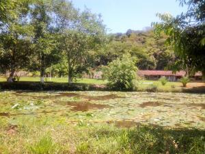 A garden outside Hotel Fazenda Terra Ramos