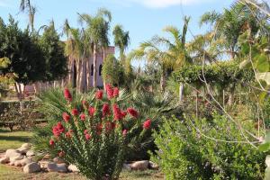 A garden outside Terra Mia Marrakech