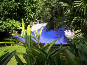 A view of the pool at Blue Banyan Inn or nearby