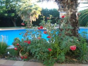 The swimming pool at or near Hotel Orfeas