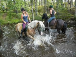 Horseback riding at the bed & breakfast or nearby