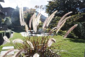A garden outside Hilltop Inn