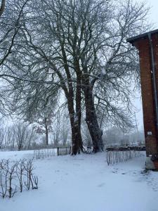 Steenhuus im Winter