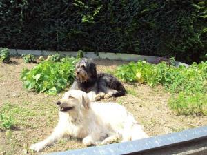 Haustiere von Gästen der Unterkunft Zum Alt-Engelwirt