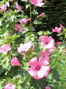 Ein Garten an der Unterkunft Zum Alt-Engelwirt