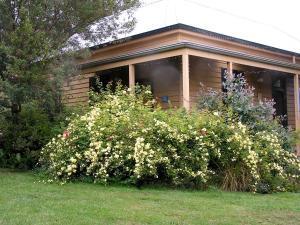 A garden outside Lemonade Creek Cottages