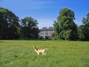 Pet or pets staying with guests at Coopershill House