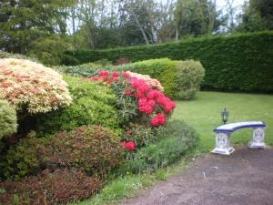 A garden outside Les Hibiscus