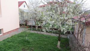 A garden outside Green Hill