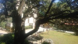 Jardin de l'établissement Logis Hôtel Résidence Les Cèdres